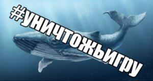 фото синего кита